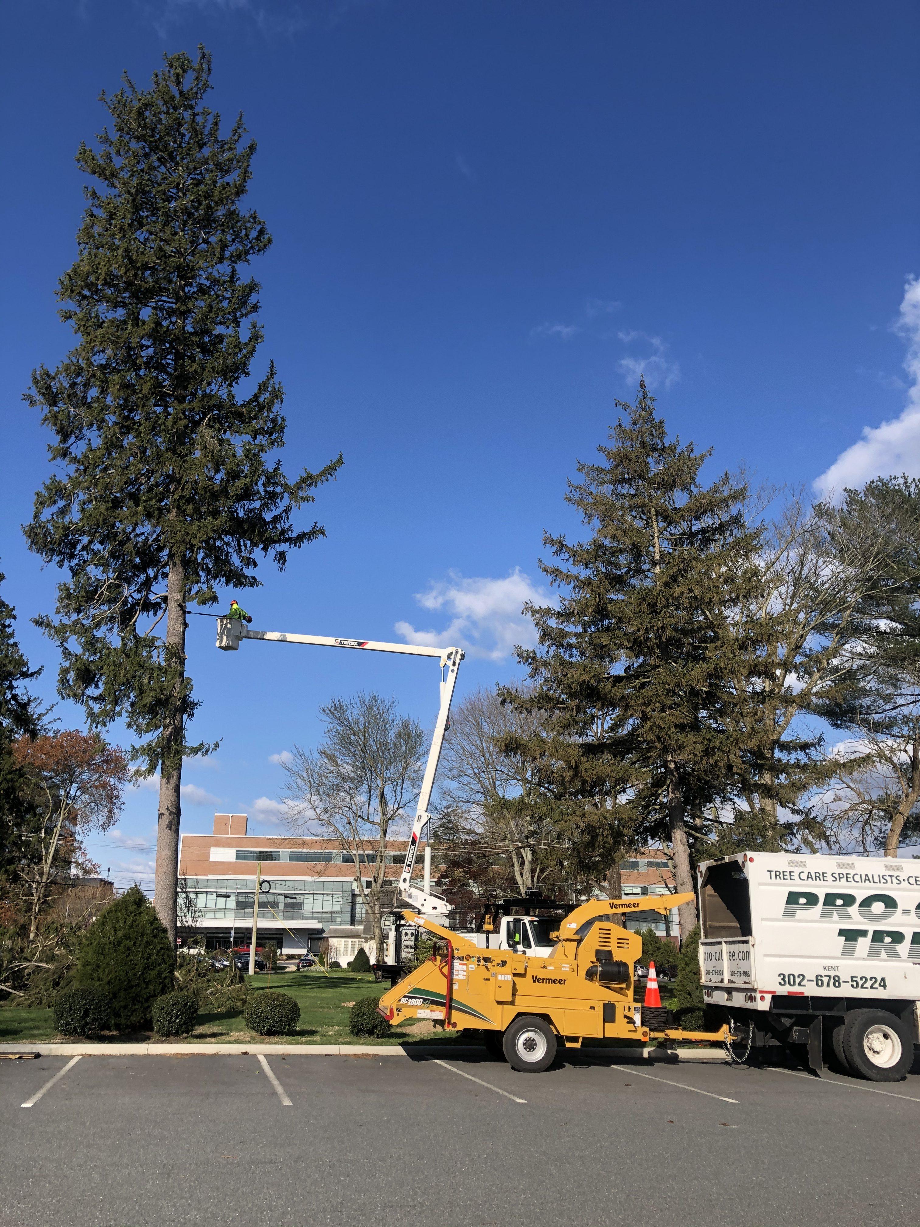 pro-cut tree cutting down tall tree